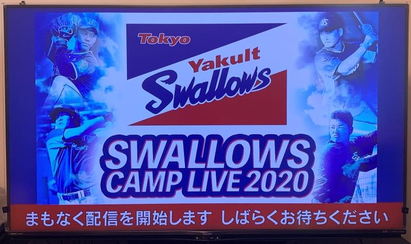 スワローズキャンプ中継をテレビで見る方法